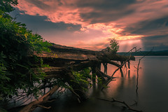 Cycle re-post 再輪迴 (kaising_fung) Tags: tree water clouds sunset sunray colors