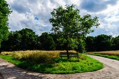 Summer (Bom-he) Tags: saarland landschaft summer landscape tree path pfad weg germany deutschland nauter natur bench bank