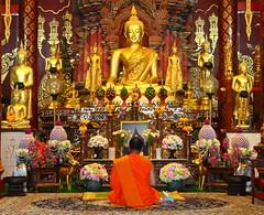 Worshipping Monk (JeffGuth) Tags: monk thailand budda temple chiangmai chiang mai asia southeastasia buddhism pray worship
