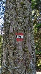 The obligatory sign (aniko e) Tags: sign hiking outdoors tree bark altrei anterivo altoadige südtirol italy italien