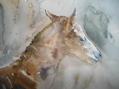 ''The foal'' ©Cristina Grinciuc,  Watercolours. (cristina grinciuc) Tags: cristinagrinciuc art watercolor watercolour visualart painting animal horse foal colours colors light