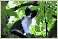 La grande aventure ! (Les photos de LN) Tags: chat chaton kitten pet animaldomestique animaldecompagnie félin chatte cat