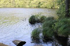 Herthasee (julia_HalleFotoFan) Tags: rügen inselrügen jasmund nationalparkjasmund königsstuhl viktoriasicht buchenhochwald herthasee halbinseljasmund