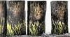 Buhnen am Meer (MiBro) Tags: ostsee buhne groins baltic sea holz wood wasser water kunst art braun brown grün green pflanzen plants