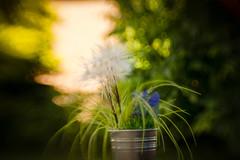 Summer breeze (gernot.glaeser) Tags: blur bokeh colours green lensbaby seasons stilllife summer deu 365project project365 unsharpphotography