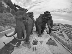 First meeting with mammoths (Alexandr Tikki) Tags: mammoth wow art amazing awesome alexandrtikki backview architecture monument best creative concept crazy dream explore fun fantastic great gopro goprohero4 hero holiday happy leveltravel moment me man minimalism perfect russia sky bw blackwhite