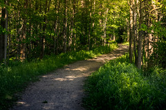 sun-dappled pathway (Christian Collins) Tags: canoneos5dmarkiv cityforest forest path trail pathway summer may verano camino green verde midland mi midmichigan michigan
