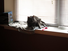 What? (Murinae) Tags: cats windowsill