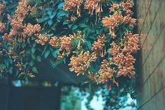 (desireelovehyacinth) Tags: 底片 walk hk hongkong nature island 35mm 135 analogue film xd7 minolta