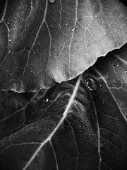 tout y sera (Nannile) Tags: study dramatic garden plants blackandwhite bw iphoneography mobilephotography iphone