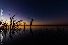 IMG_5506 (biglaptogs) Tags: barmera lakebonney riverland sa states sunsetsunrise