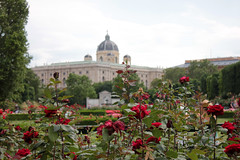 Volksgarten (Stephanie Rutt) Tags: vienna volksgarten flowers roses hofburg
