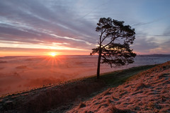 Solairty Tree (littlenorty) Tags: air colour england europe fujixt2 gear landscape martinsellhill mist nature pewsey plants scotchpine sunrise tree type unitedkingdom weather wiltshire fuji1024