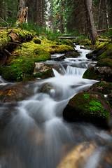 White threads (Adam Wang) Tags: landscape water nature travel rock tree motion leaf wood cascade stream flow outdoors moss wet creek yoho ohara