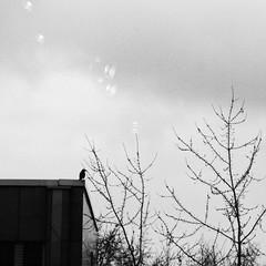 (Daniel Iván) Tags: blackwhite blackwhitephoto blackwhitephotography blancoynegro street candid streetphotography danielivan danieliván calle fotografíadecalle streetlife winter invierno streetportrait geometry geometría highcontrast altocontraste white blanco thedecisivemoment animal bird birds tree trees ave aves árbol árboles reflexión reflection
