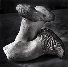 Still Life 2 #  36  ... ; (c)rebfoto (rebfoto ...) Tags: blackandwhite rebfoto stilllife still mushrooms bw naturemorte