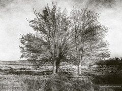 Atemporal views #1 (ILO DESIGNS) Tags: árbol artística creativa horizontal monocroma naturaleza paisaje retro trees nature naturallight vintage artistic texture pictorial monochrome fineart old grey field meadow europe spain d60 blackandwhite landscape
