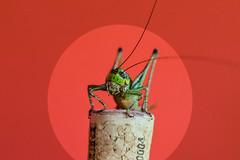 grass or wine? (simo m.) Tags: grasshopper cork