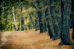 walk (Eggii) Tags: wood madaje walk trees path mood summer hot