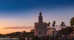 Torre del Oro al atardecer (antonio urbano marmol) Tags: antoniourbano sevilla torredeloro atrdecer