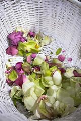 IMG_9156.jpg (Dhammika Heenpella / Images of Sri Lanka) Tags: dhammikaheenpella srilanka imagesofsrilanka basket flowers lotuspetals ධම්මිකහීන්පැල්ල ශ්රීලංකාව ඉමේජස්ඔෆ්ශ්රීලංකා මල් මල