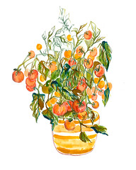 Tomato plant (Sharon Farrow) Tags: tomatoes tomatoplant plants growing growth food fruit health healthy eating foodanddrink foodillustration foodanddrinkillustration mixedmedia paint pen pencil ink leaves red green orange nature illustration illustrator illustratedfood sharonfarrow