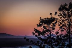 A song at twilight (dmunro100) Tags: noosa queensland dusk sunset twilight goldenhour winter bird birdsong blackbird tree shore hills sea canoneos80d ef70300mmf456lisusm