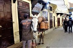 REPARTO A DOMICILIO (ameliapardo) Tags: repartidor gas butano bombonas burro marruecos aireibre medina fujixt1