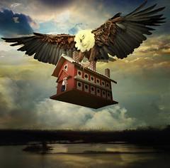 Gulliver's Travels 1 (jaci XIII) Tags: asviagensdegulliver literatura aventura casa águia pássaro pessoa homem gulliverstravels adventure home bird man person