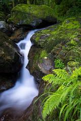 Looks like silk (henrik_thiele) Tags: long exposure waterfall wasserfall morning ardèche france frankreich polfilter bw langzeitbelichtung water wasser landscape landschaft fern farn green grün