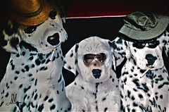 I BRAVI (giovanni.muscara28) Tags: fotografia photography photo music dogs cani rock three laugh cool good color photoofthe day creativity like vision musique cigarette cappello hat white sunglasses