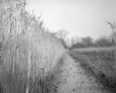 Woodwalton Fen #4 (Andrew Bartram (WarboysSnapper)) Tags: rollfilmweek pentax6x7 slr reeds fen woodwalton cambridgeshire drains wetland 6x7 believeinfilm