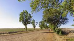 Camino a las bodegas (@pabloralonso) Tags: villamayordecampos zamora landscape paisaje verano calor summer hot camino naturaleza nature arboleda tree girl beauty