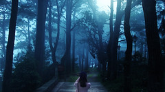 I See the Way (herbertlizares29) Tags: asia philippines nature mountain landscape landscapephotography creepy fog baguio photography