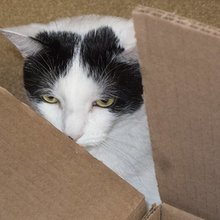Camera-shy 1 -[ Happy Caturday ]- >>Explored<<