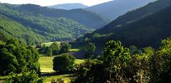 Hobbitshire.. (davidpemberton78) Tags: sunlight evening verdant valley scenery landscape lhérault languedocroussillon saintponsdethomières