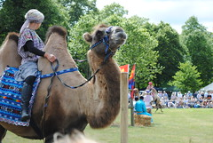More Camels (KT-wu) Tags: camels thewildcamelprotectionfoundationwcpf