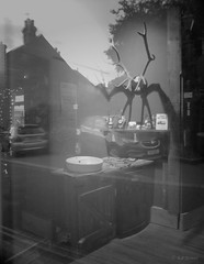 . (amazingstoker) Tags: deer skull barber shop window basingstoke basingrad amazingstoke hampshire reflection eerie basin bowl head pomade spooky mystery old headcase church square monochrome black white liminal space hipster