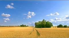 Harvest (vonreichenbach) Tags: summer sommer feld field ernte harvest yellow green sky blue wolken flickr explore fuji fujifilmxt1