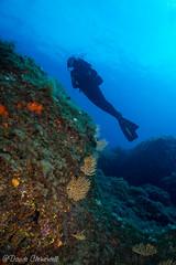 IMG_6023 (davide.clementelli) Tags: scuba underwater underwaterlife diving dive immersione portofino colori colors colore color fishes fish pesci