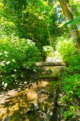 D7K_2753.jpg (wackybadger) Tags: cudahywoodssna nikon tree forest wisconsin milwaukeecounty nikond7000 sigma1020mmf4exdchsm wisconsinstatenaturalarea water stream sna351