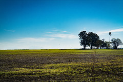 Horizonte (uvahay) Tags: horizonte pampaargentina buenosaires naturaleza campo green