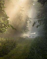 Breakfast Time (Stu Meech) Tags: charlecote park warwickshire deer sunrise mist nikon d750 70200f4 stu meech