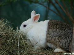 est200624 (Protty coniglio nano) Tags: coniglio conigli protty bunny bunnies rabbit rabbits kaninchen lapin coniglietti coniglionano prottyit coniglinani oryctolagus oryctolaguscuniculus