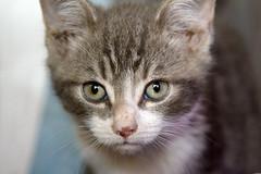 Peter (ambeizzi) Tags: cat pussy feline pet love furry eyes cute aww