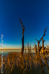 IMG_5406 (biglaptogs) Tags: barmera lakebonney riverland sa states