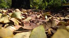 Cambios (<A.F.N.P>) Tags: hojas cambios otoño muerte vida seco hojassecas naturaleza belleza paraíso