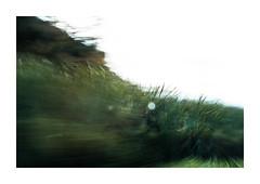 R E M A N S O (creonte05) Tags: explore eduardomiranda flickr nikon 2017 d7100 chile rural campo nature naturaleza verde green blur icm ngc