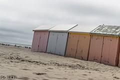 IMG_0258 (Azezjne (Az photos)) Tags: canon 75300 50 stm 600d berck sur mer bercksurmer cote côte dopale bromance plage sable bokeh zoom coucher soleil sunset beach sand eclipse dune mouette animaux animalière flou 75 300