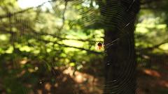 DSCN7574 (lalondepelletier) Tags: macro araignée spider insecte insect nature nikon coolpix p900